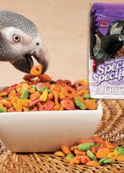 PARROT FOOD