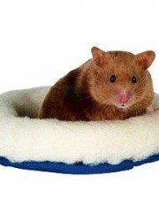 trixie hamster bed 62701