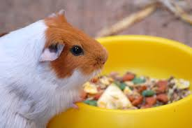 SMALL ANIMAL FOODS