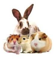 SMALL ANIMAL HEALTH