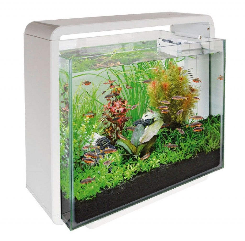 Fish for aquarium online - Super Fish Home 40 Fish Tank Aquarium With Filter Led Lighting 40 Litre White